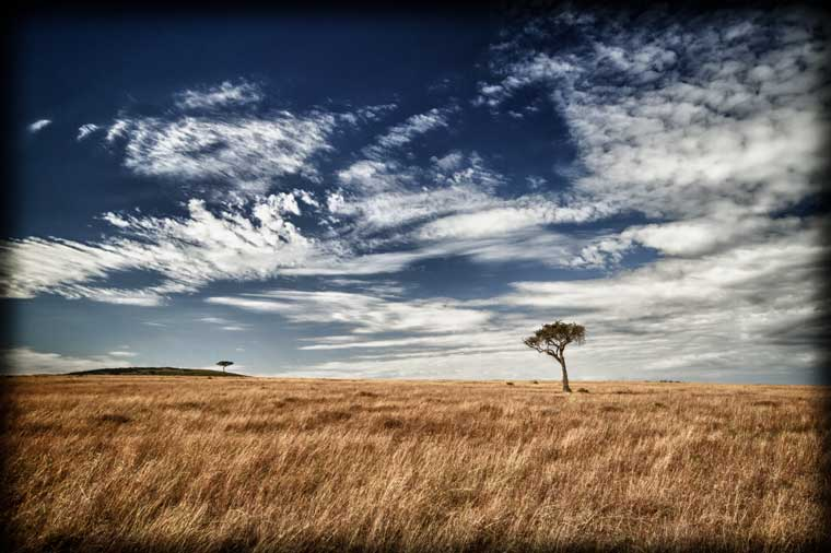 typical Mara landscape with awesome clouds and lonely trees